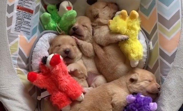 sleepingcuties0_e