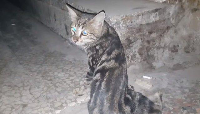 syria1_e