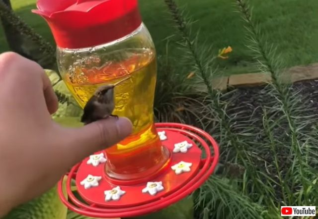 hummingbirdinmyhand2_batch