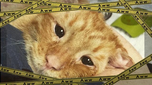 cat-3_e0-frame