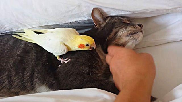 birdprotectingcat1