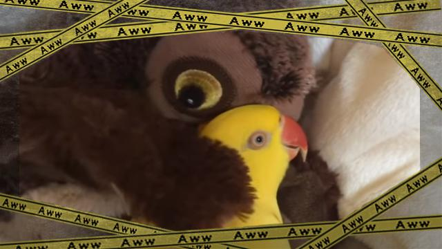 parrot-f [www-frame