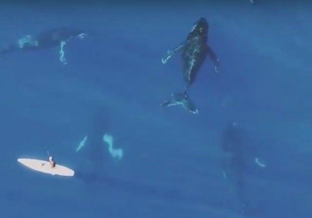 whalesnpaddleboarder5_e
