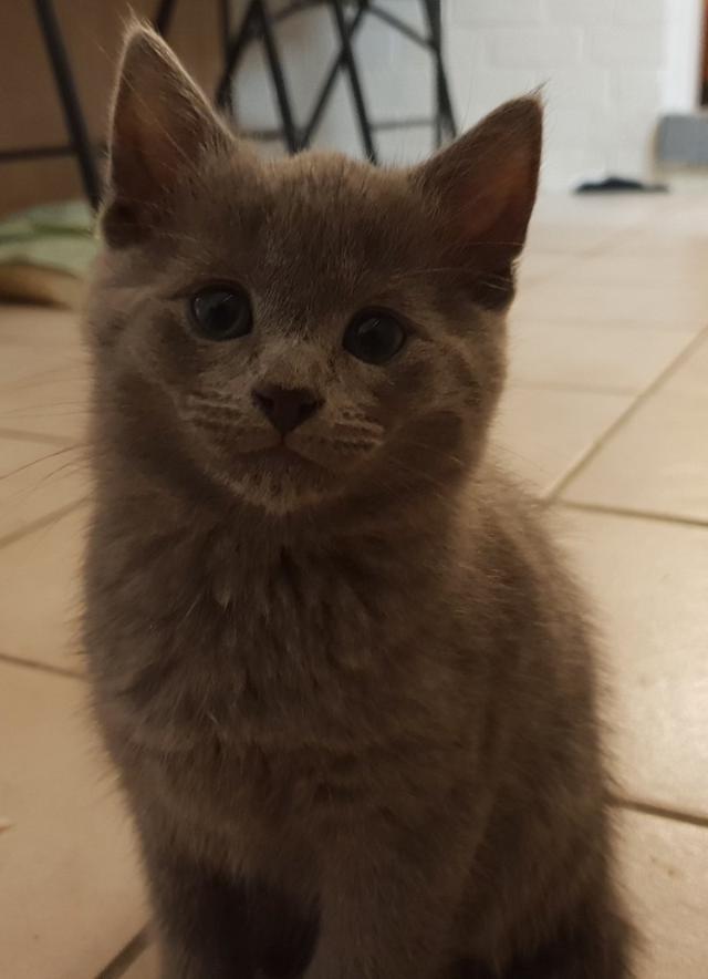 cat-14 [www.imagesplitter.net]