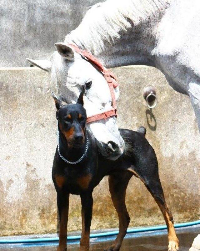 犬と馬9_e