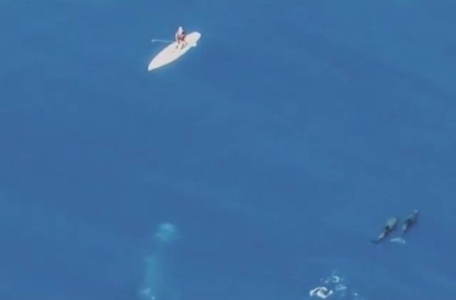 whalesnpaddleboarder1_e