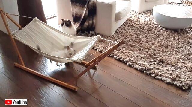 hammockcats2_640