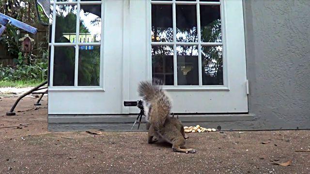 squirrelsvsmirror2