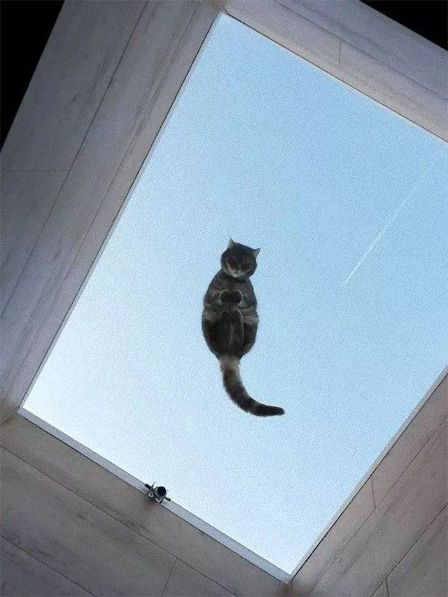 funny-cats-on-glass-18-5c37545059013__605_e