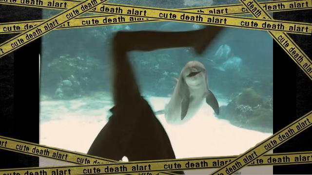 dolphin-f [www-frame