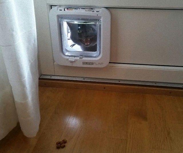 funny-idiot-cats-27-5ae02f7ad51ce__605_e