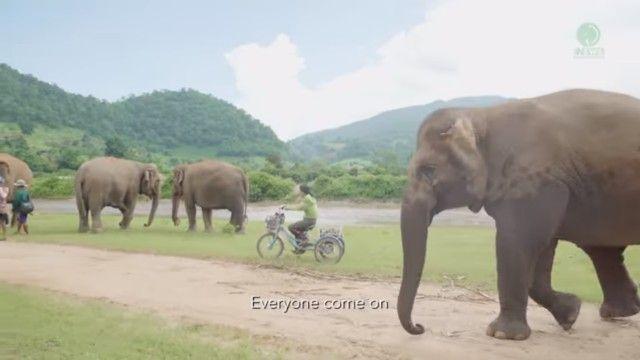 elephantsnbicycle1_e