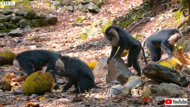 macaquesnsquirrels5_640
