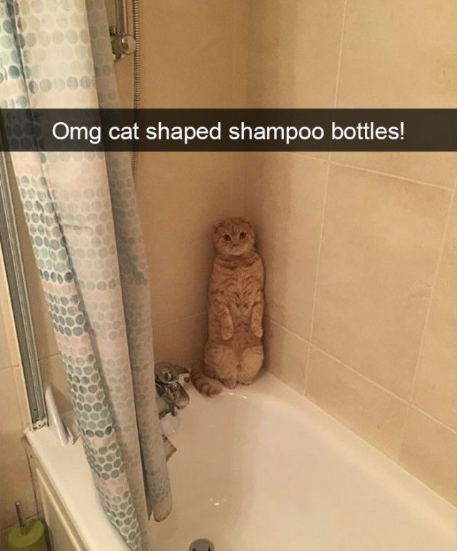 funnyanimals10_e