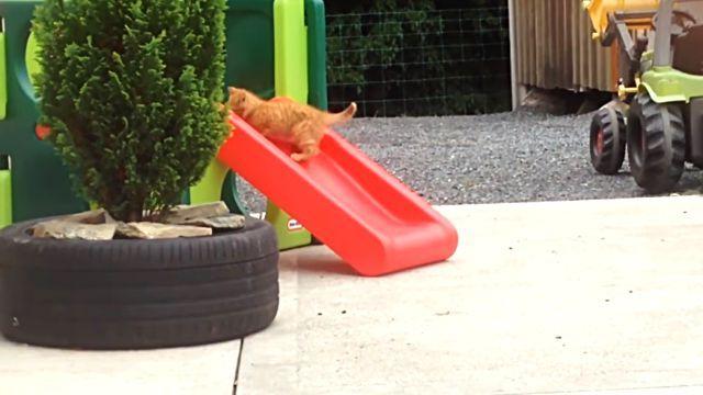catsnslide6