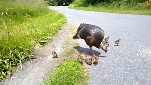 turkeymom1