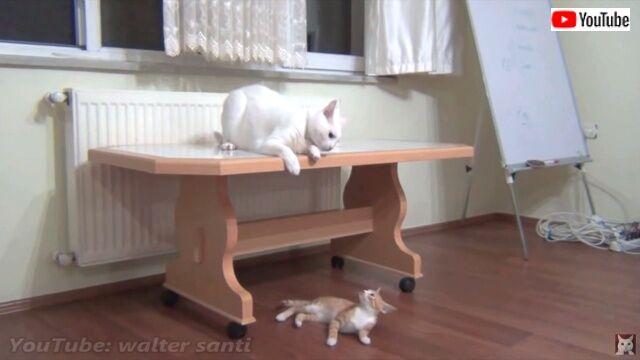 kittenwinsoldersheart3_640