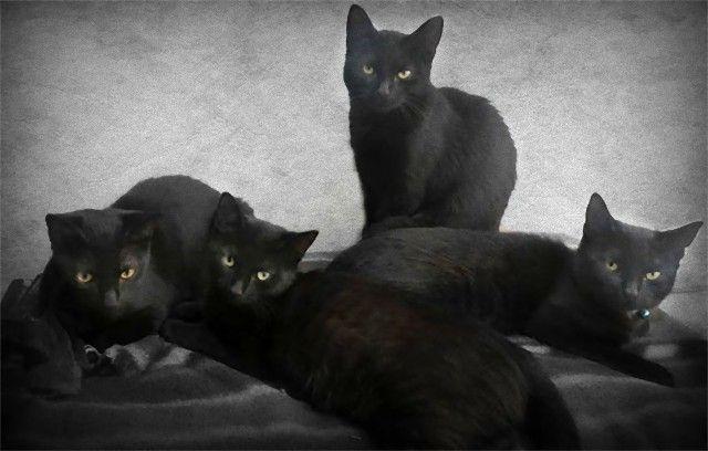 living-with-multiple-pets-24-59b7e6dc75ce7__605_e