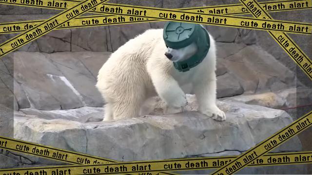 bear-f [www-frame