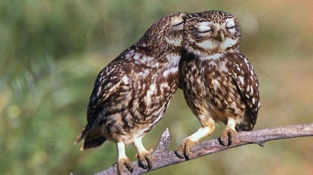 owl-photography-cute-100__880_e