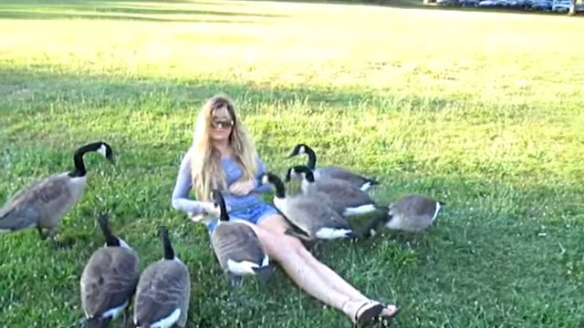 goslings6