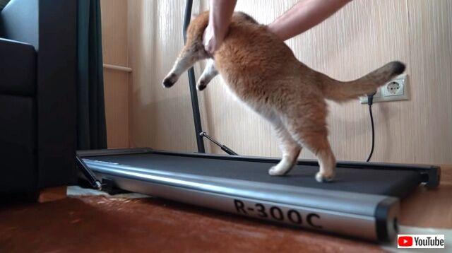 treadmill6_640
