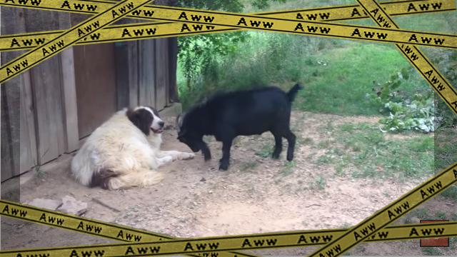 goat [www-frame