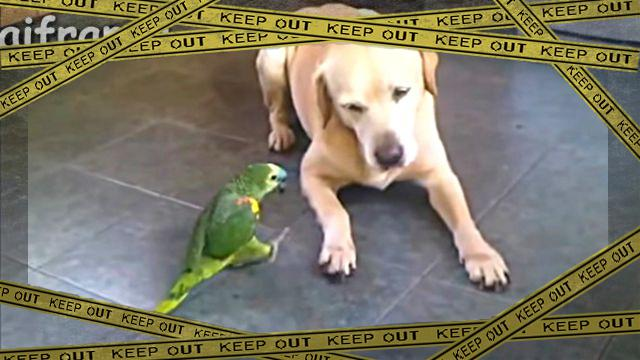 parrotdog1-frame