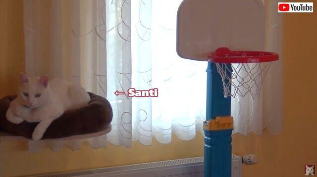basketballcats1_640