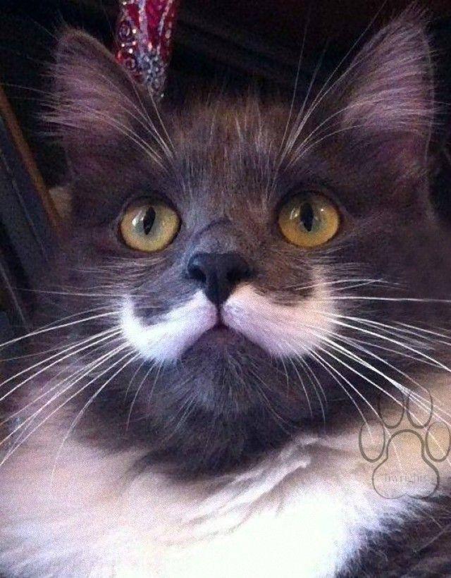 mustaches15_e