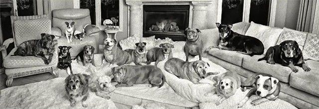 living-with-multiple-pets-5-59b7e50253128__605_e