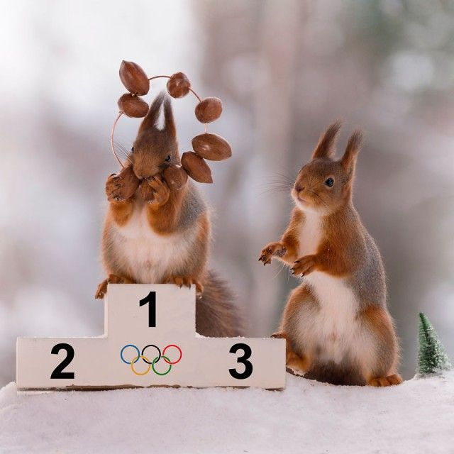 wintersportssquirrel15_e