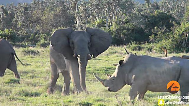 elephantnrhino6