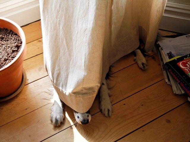 hide-and-seek8_e