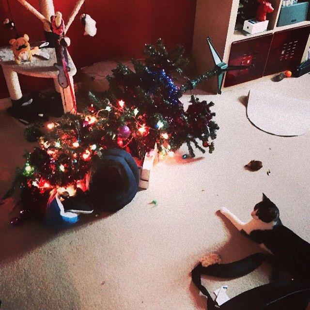 XX-animals-destroying-Christmas-4__605_e