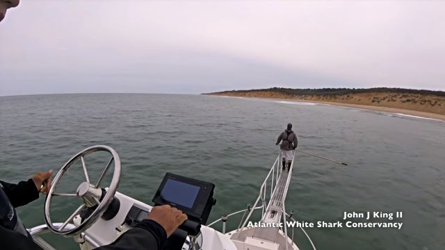 whitesharkbreach1