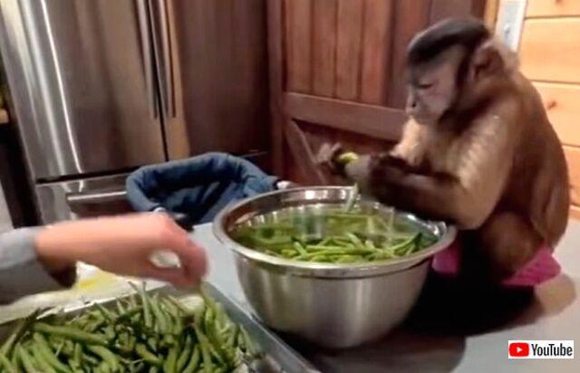 monkey2_640
