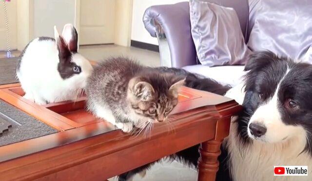 おうちに子猫がやって来た!犬とウサギと猫のいる、ハッピー過ぎる光景を堪能しよう