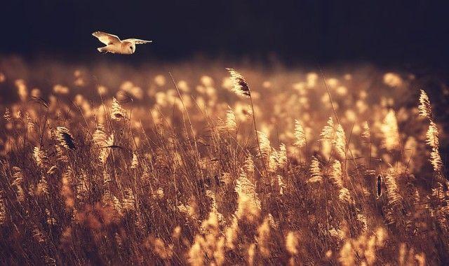 owl-photography-17__880_e