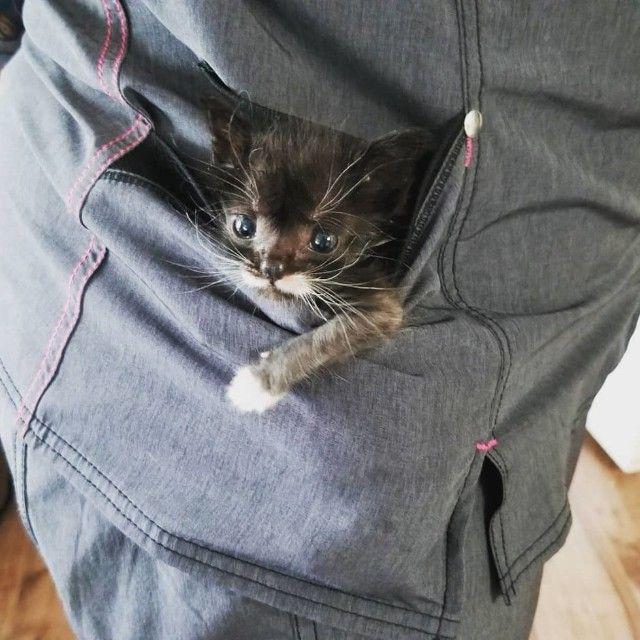 kitten-3 (1)