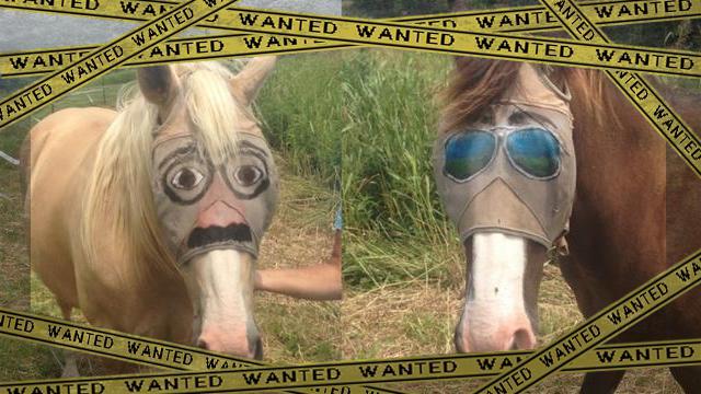 horses-fly-mask [www-frame