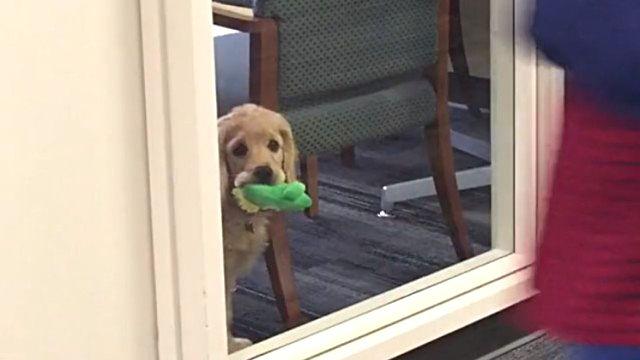 officedog3_e