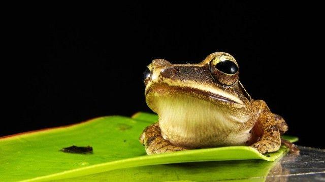frog-173622_960_720_e