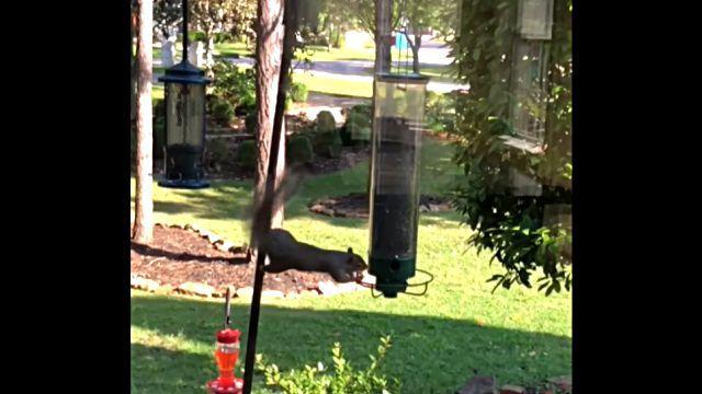 squirrelnfeeder3