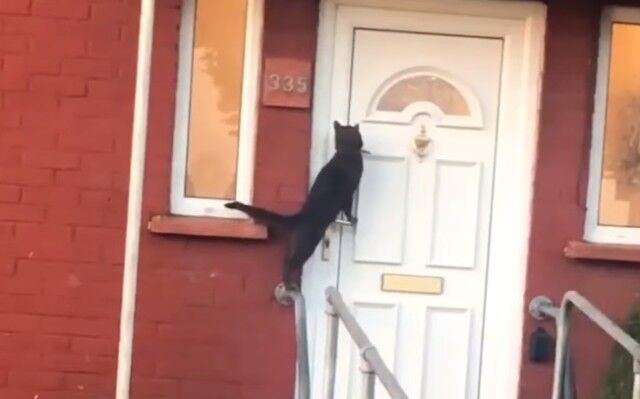 knocksondoor1_e