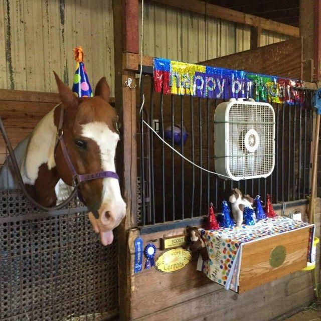 horses-birthday_e