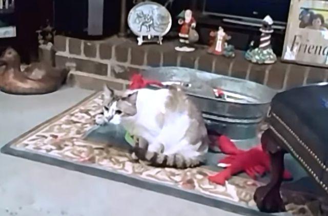 frenchbulldogvscat5
