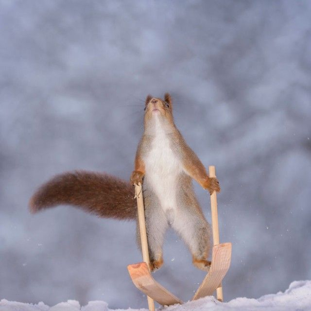 wintersportssquirrel7_e