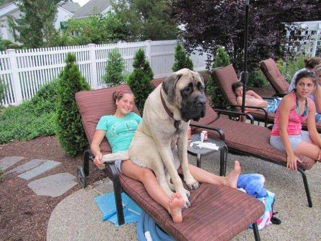 big-puppy9_e