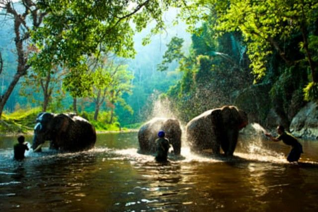 elephant13_e